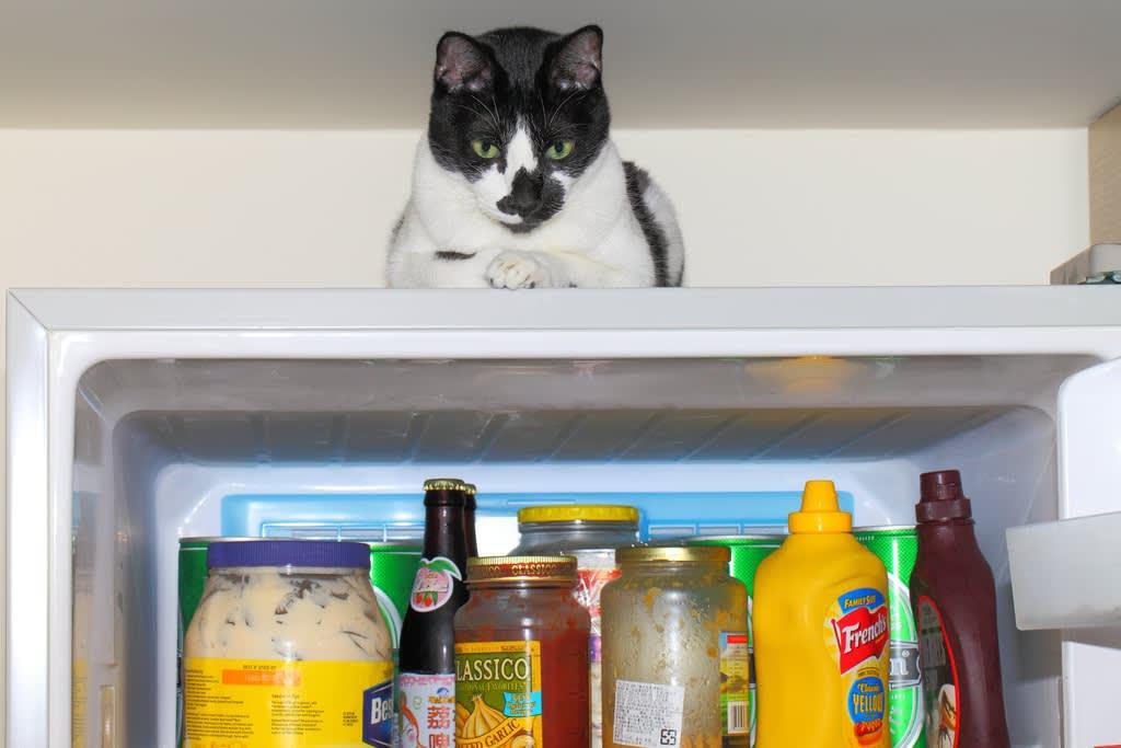 cat-on-top-of-fridge
